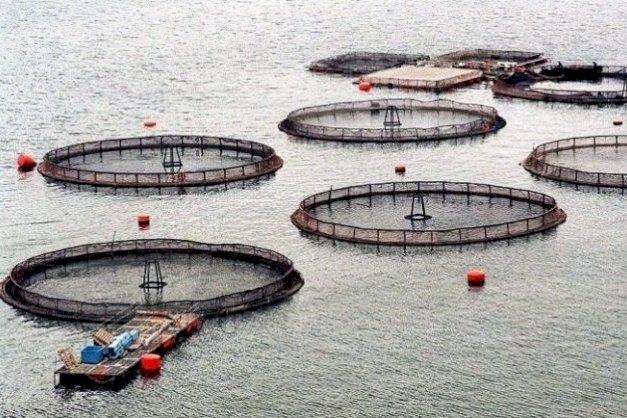 Desde la UNTDF celebraron la sanción de la Ley que prohíbe la salmonicultura en Tierra del Fuego