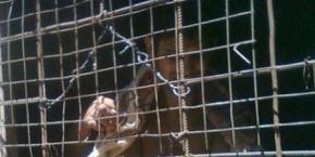 Corrientes: rescatan a un hombre que vivía encadenado
