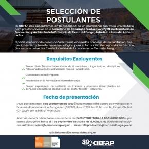 El Gobierno provincial y el Centro de Investigación y Extensión Forestal Andino Patagónico buscan reactivar la delegación en Tolhuin para potenciar el desarrollo del sector maderero