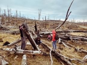El Ministerio de la Producción y Ambiente anunció el inicio de una nueva temporada de restauración de bosque nativo