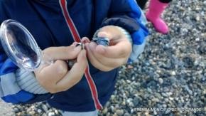 Este sábado comienza el ciclo de talleres para niños en el Centro de Interpretación de la Reserva Costa Atlántica