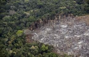 La destrucción de los bosques y los desequilibrios provocados por el hombre favorecen pandemias como el Coronavirus