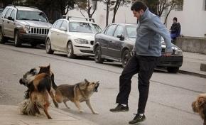 La Municipalidad de Ushuaia vacunará a los perros contra la rabia de forma gratuita