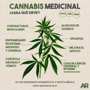 La OSEF deberá garantizar el acceso de los pacientes al cannabis medicinal