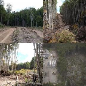 Melella confirmó que no continuará la obra del Corredor Costero y adelantó que abrirán el informe ambiental que Gorbacz declaró reservado