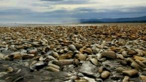 Por marea roja declaran la veda en todo el litoral marítimo provincial