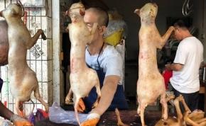 Prohíben en una ciudad de China la venta y el consumo alimenticio de perros, gatos y serpientes