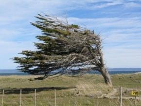 Rige alerta por vientos intensos para Tierra del Fuego